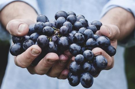 A quoi servent les cépages rares ? | Route des vins | Scoop.it