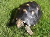 Reproduction des tortues de terre et de mer - Blog de l'animalerie Zoomalia | PETS & ANIMAUX | Scoop.it