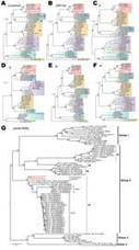 Ahead of Print - Full-Genome Deep Sequencing and Phylogenetic Analysis of Novel Human Betacoronavirus - Vol. 19 No. 5 - May 2013 - Emerging Infectious Disease journal - CDC | Next generation sequencing for global infectious disease control | Scoop.it