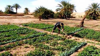Algérie : les communes agricoles peinent à voler de leurs propres ailes | Afrique: développement durable et environnement | Scoop.it