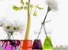 Física en Línea tu portal educativo para ciencias | CALIDAD DIRECTIVA | Scoop.it