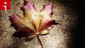 Hello fall, hello spring | Life @ Work | Scoop.it