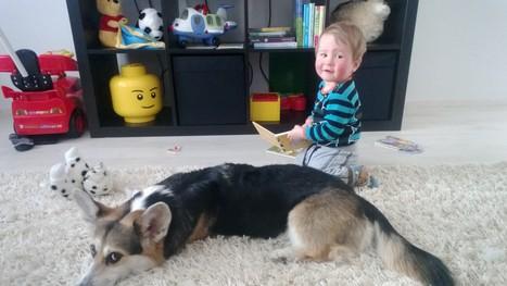 She loves children | Nala the Corgi | Scoop.it
