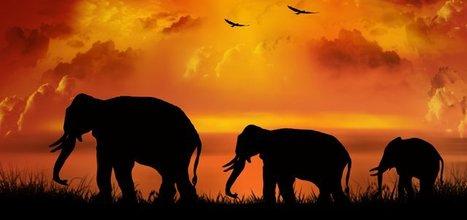 Insolite : Le rapetissement des espèces animales : une conséquence inattendue du réchauffement climatique   Developpement Durable   Phénomène de gentrification   Scoop.it