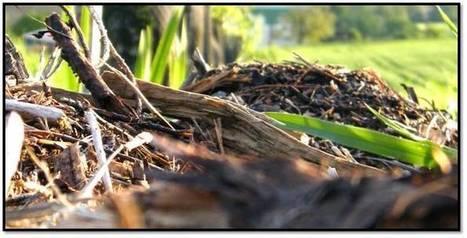 Un sol toujours couvert mais jamais travaillé ! - Cultivons une terre vivante | Un sol vivant pour nos enfants | Scoop.it