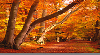 Leaf-Peeping Road Trip Tips : Fall Foliage Road Trips : Travel Channel | Road Tripping | Scoop.it