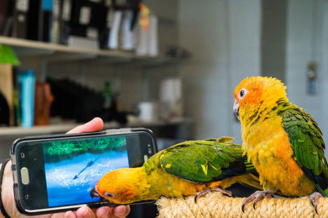 Birds exercise minds using video games | All Things Zygodactyl | Scoop.it