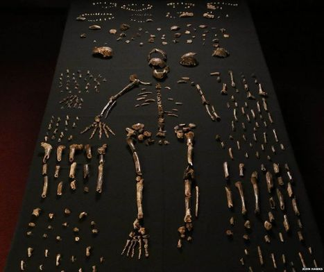 New human-like species discovered in S Africa | Learning, Teaching & Leading Today | Scoop.it