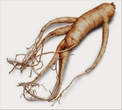 Domie Plantes: Ginseng aphrodisiaque aux bienfaits surprenants   Plantes médicinales   Scoop.it