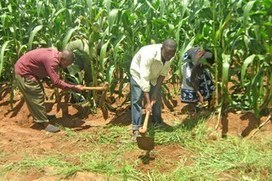 Climate & Agriculture   Malawi   Scoop.it