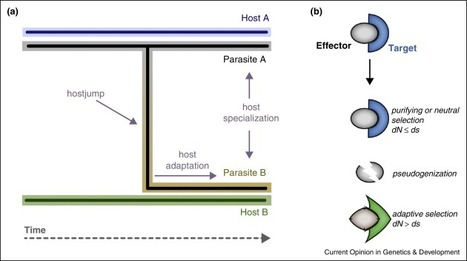 The two-speed genomes of filamentous pathogens: waltz with plants | MycorWeb Plant-Microbe Interactions | Scoop.it