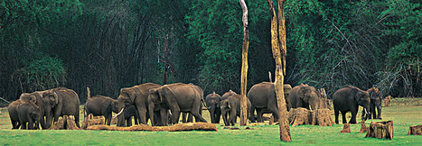 Monsoon Packages | Kerala Holiday Packages | Kerala Tour Packages | your kerala holidays | Scoop.it