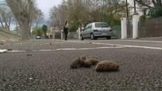 Perpignan : haro sur les crottes de chien - France 3 Languedoc-Roussillon | CaniCatNews-actualité | Scoop.it