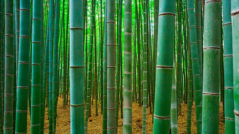 African Diaspora: Africa's vast bamboo reserves untapped green gold | Compton Herald | Sustainable Buildings, Made in Italy. Rinascimento Bene Comune by IWTT | Scoop.it