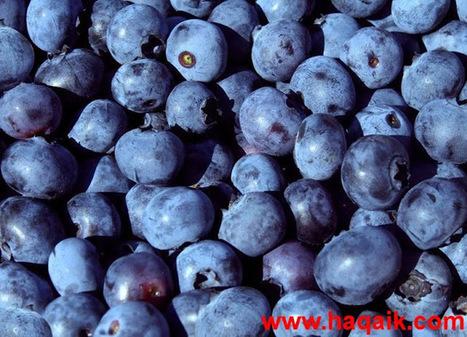 حقائق مذهلة: تناول التوت لزيادة ذكاءك!! | www.macsource-eg.com | Scoop.it