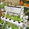 Urban Agriculture and Design