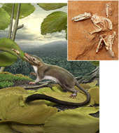 Ancestor of All Placental Mammals Revealed - ScienceNOW | Genetic engineering and Human genetics, background reading and resources for IB | Scoop.it