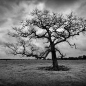 The Zone System in Black and White Photography | Best Photography tips and tricks | Scoop.it