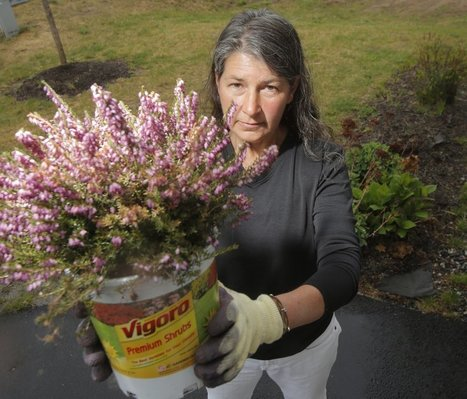 – Maine retailers phasing out some pesticides over concerns about honeybee health | Sustain Our Earth | Scoop.it