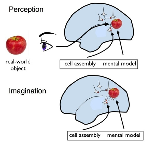 Perception and Imagination: a Neuroscientist's Perspective | BrainFacts.org Blog | The brain and illusions | Scoop.it