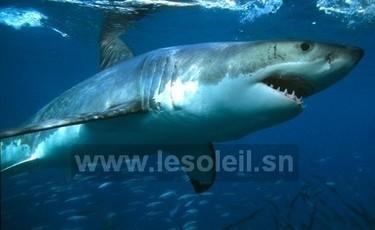 Réflexion sur des stratégies de sauvegarde des requins | Protection des Océans | Scoop.it