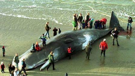 Hallan muerta a una ballena con 20 kilos de plástico en el estómago | Agua | Scoop.it