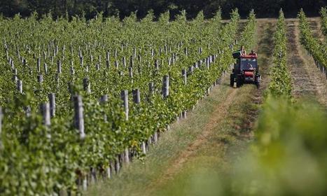 Avenue des vins se lance en Europe   Vin 2.0   Scoop.it