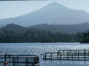 Tasmanian aquaculture industry gets a boost - FIS | Aquaculture (Global Aqua Link) | Scoop.it