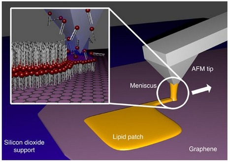 Direct 'writing' of artificial cell membranes on graphene | Research | Scoop.it