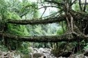 Living Growing Root Bridges Are 100% Natural Architecture | MSustainability | Scoop.it