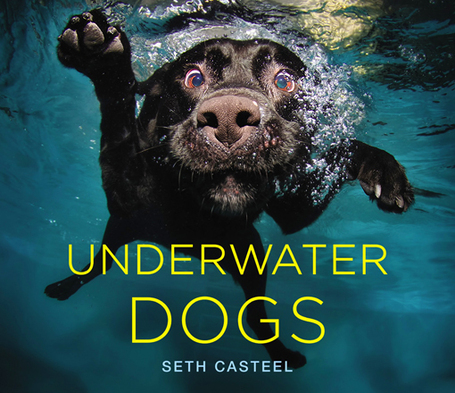 'Underwater Dogs: 10 cute/ ferocious photos | As digitally seen ... | Scoop.it