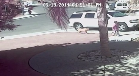 Caught on tape: Cat saves boy from dog attack | Xposed | Scoop.it