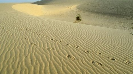 Niger aims to prevent Sahara deaths | Global Affairs & Human Geography Digital Knowledge Source | Scoop.it