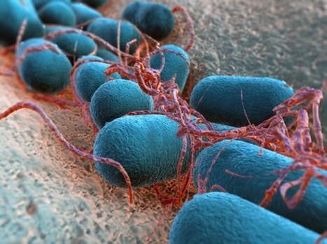 Escherichia coli entero patógena (ECEP) | Escherichia coli | Scoop.it