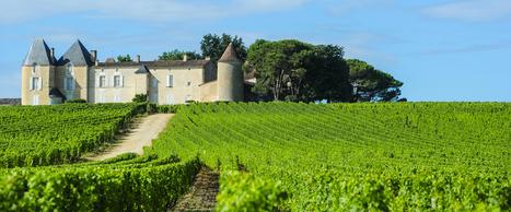 Pourquoi le négociant en vin Advini met SAP Hana en bouteille | Le vin quotidien | Scoop.it