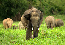 UN Security Council targets poaching and wildlife trade with DRC sanctions | UN Security Council | Scoop.it