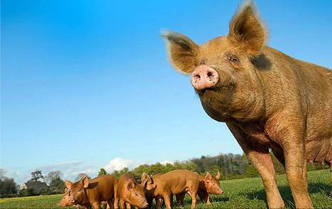 Pour l'environnement, mangez moins de viande et de fromage ! | Education environnement | Scoop.it