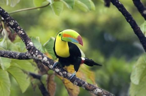 Why Do We Need Species? Fighting Climate Change, for One | Rainforest EXPLORER:  News & Notes | Scoop.it