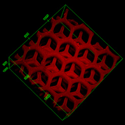 Bioprinted 3D liver-mimicking device detoxifies blood | KurzweilAI | Longevity science | Scoop.it