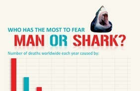 Man or Shark? Help Spread the Word! | Ocean News | Scoop.it