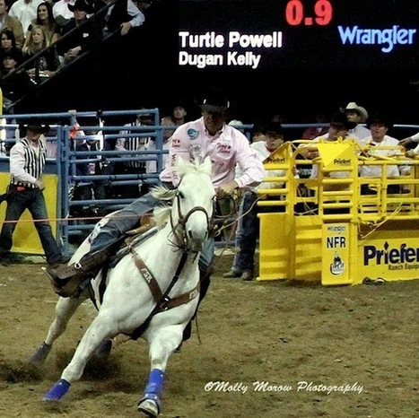 "Laminitis-Surviving Rodeo Star ""Vegas"" Is Back: Turtle Powell's AQHA Roping Horse of the Year Returns to National Finals Rodeo 