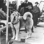 Millions of dogs, cats coddled, 200000 gassed each year in pet-mad Japan - The Japan Times | Intercultural communication | Scoop.it