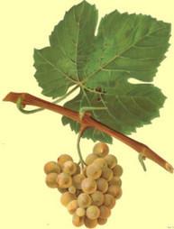 Wines of Jura, France   Jura   Scoop.it