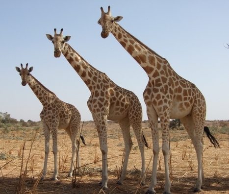 African Development Bankl and WWF Call for Urgent Action to Combat Wildlife Crime | Leading for Nature | Scoop.it