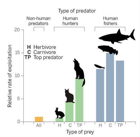 Our unsustainable habit of hunting and fishing only for adult animals   IB Biology   Scoop.it