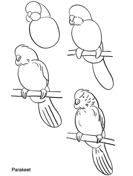 How to draw a Parakeet. | Art* | Scoop.it