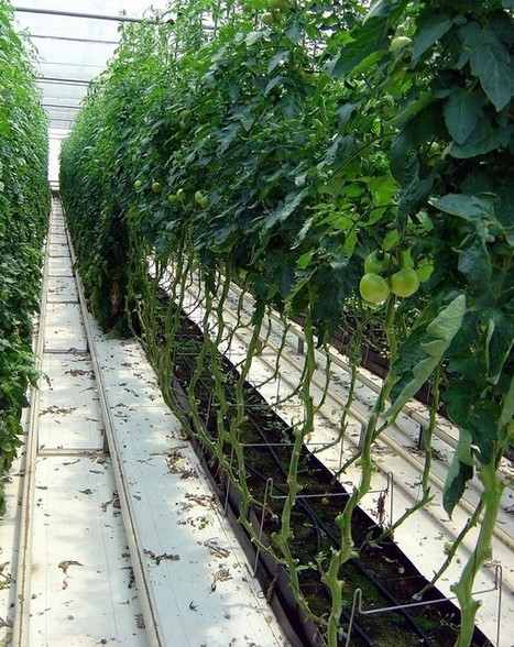 Hidroponía: tecnología eco-eficiente | Cultivos Hidropónicos | Scoop.it