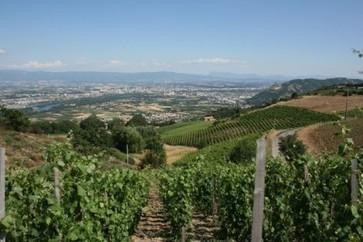 To de-stem or not to de-stem ? | Vitabella Wine Daily Gossip | Scoop.it