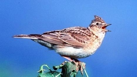 Les oiseaux désertent les basses altitudes | Biodiversité | Scoop.it