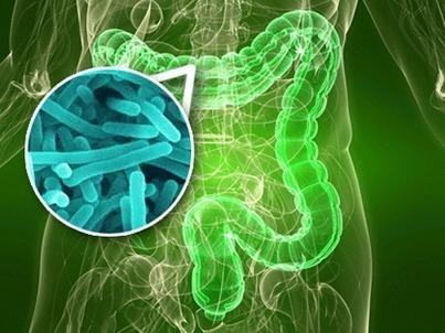 Bactérias podem ser chave para perda de peso, diz estudo chinês   Vida Saudável   Scoop.it